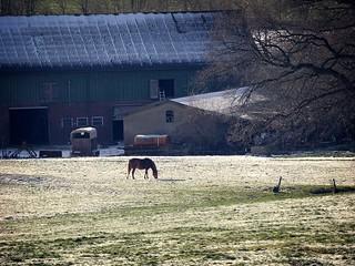 2007:01:27 14:36:08 - Winter in Tarbek - Schleswig-Holstein - Germany
