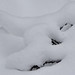 Snow by evisdotter