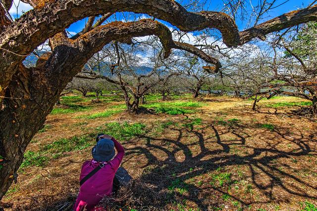 _8509047, Nikon D850, AF-S Nikkor 16-35mm f/4G ED VR