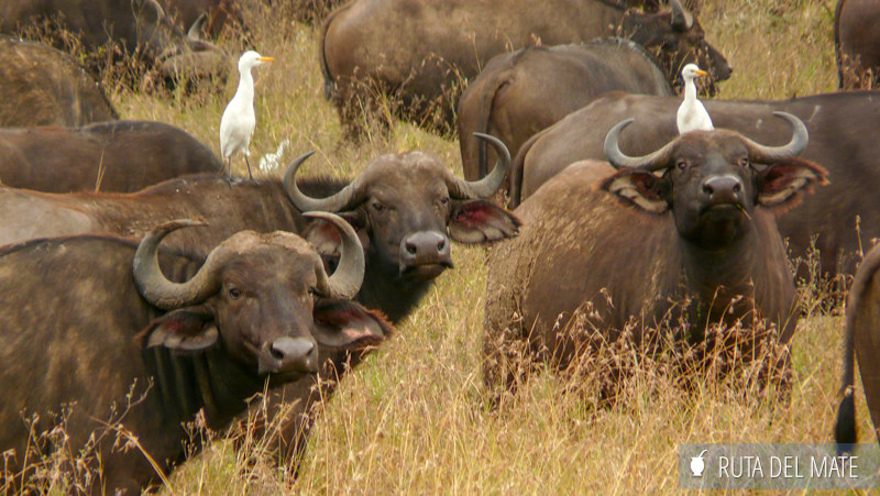 Animales hacer un safari P1130546