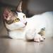 Unnamed cat by Said Tayar Segundo