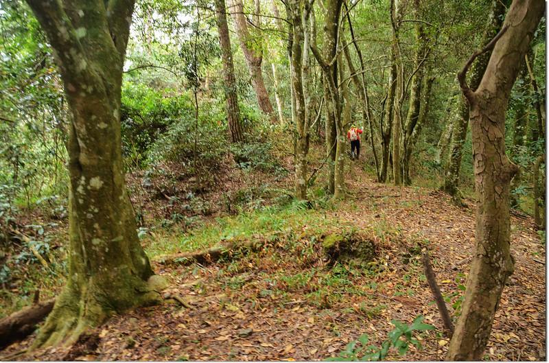 歐帕喀爾山相思林路段
