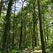 Notton Wood Nature Reserve (99)