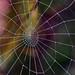 """Ever Decreasing Circles"" by AndyorDij"