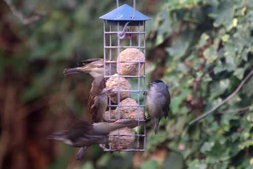 Big Garden Birdwatch 2019