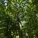 Notton Wood Nature Reserve (63)
