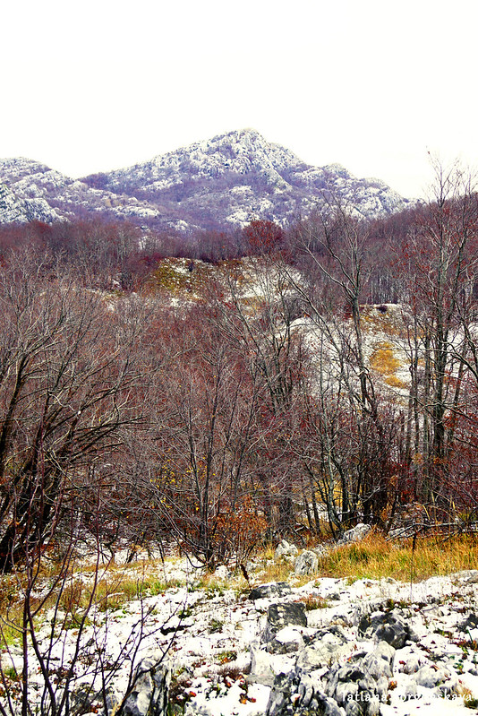 Лес и горные вершины