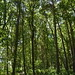 Notton Wood Nature Reserve (129)