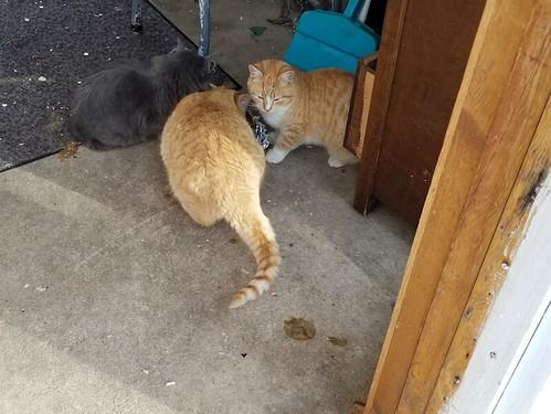 20181215.cats.sunroom