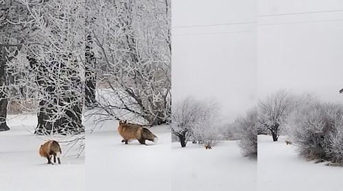 20181212.fox