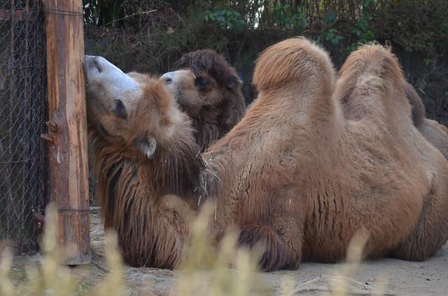 八木山動物公園_20190114