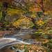 Autumn Woods and Burn . by Gordie Broon.
