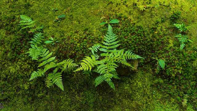 Ferns in the moss