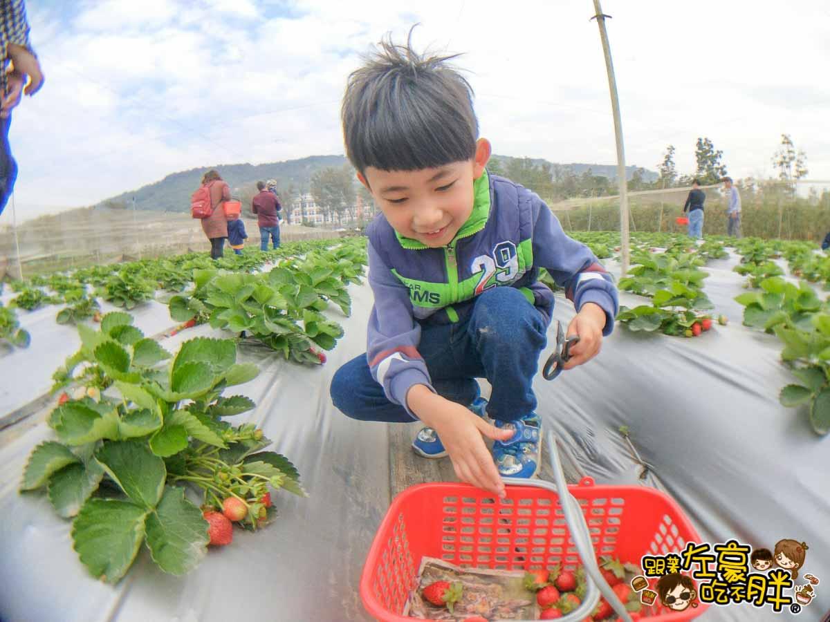 大岡山觀光草莓園-6