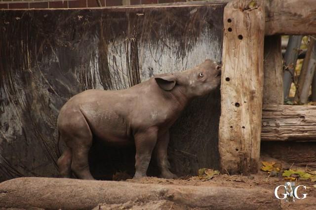 Besuch Zoo Berlin 11.11.201858