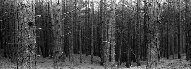 Bomen Door Het Bos
