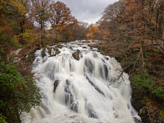 Autumnal Swallow Falls