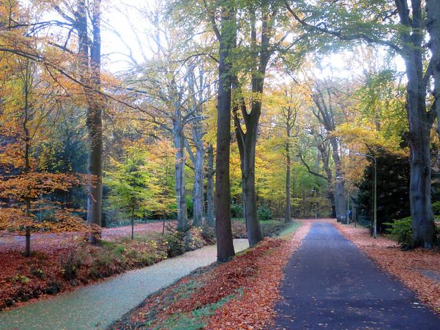 Autumn, Canon IXUS 127 HS