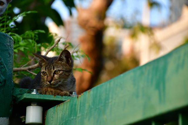 Hiding cat...