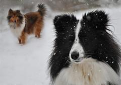 Begegnung im Schneetreiben