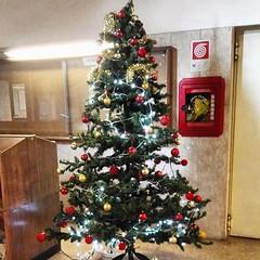#Buongiorno Sapienza con una foto dell'albero di Natale dell'Edificio di Chimica Stanislao Cannizzaro di @nocciolina_21 ・・・ #Repost: «#christmastree:christmas_tree: #christmastime #NuovoEdificiodiChimica 7/12/2018» ・・・ #