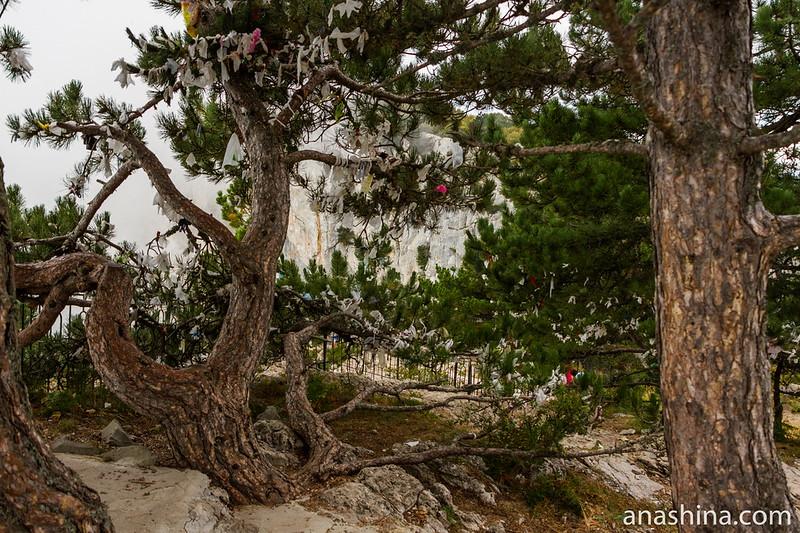 Дерево с ленточками, Ай-Петри, Крым