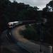 8.3.1987 Belair - South Australia Steamranger loco SAR 909 hauling Southern Encounter (p0106803_k)