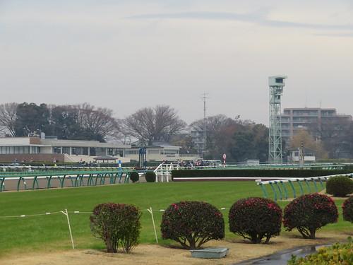 中山競馬場の2号生垣障害