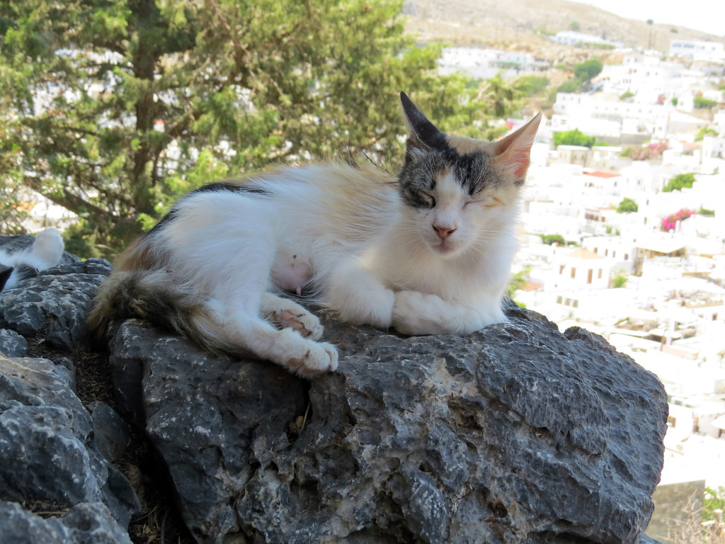 Котик на фоне Линдоса