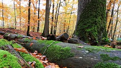 Les feuilles voltigent au vent du Nord