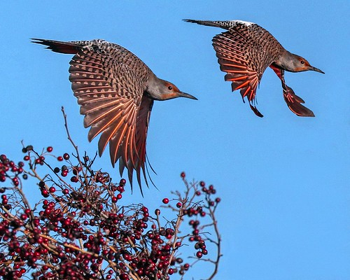 2 Flickers - EXPLORE © Click to view large