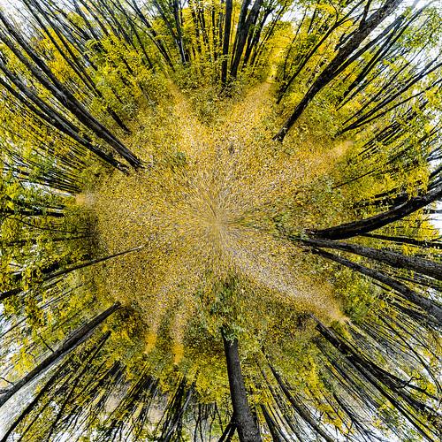 abstract autumn art forest poltava ukraine travel nature