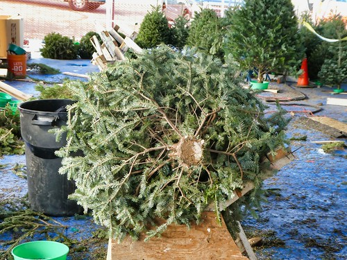2018-12-01 - Getting our Christmas Tree