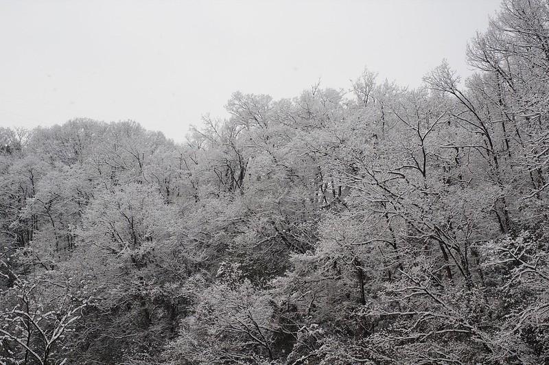 そしてまた雪景色に、、、、。