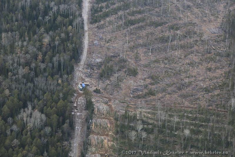 Чунский район. Вырубка древисины, октябрь 2017