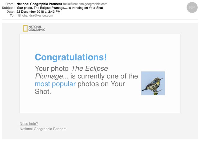 Your photo The Eclipse Plumage is trending on Your Shot