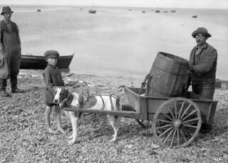 Carl Dorion, a blind fisherman, with his dog hitched to a wagon containing a barrel / Carl Dorion, un pêcheur aveugle, transportant un tonneau dans une charrette tirée par son chien