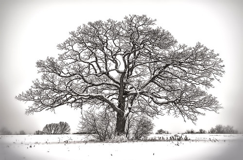 Standing through another winter