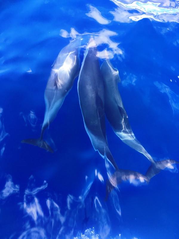 Lord Howe Island.