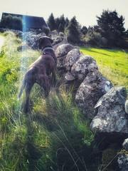 #Connemara #WalkingConnemara