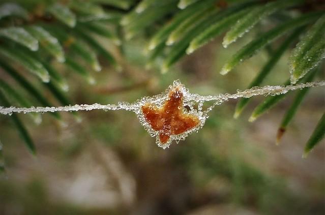 Frosty Seed on Frosty, Panasonic DMC-TZ30