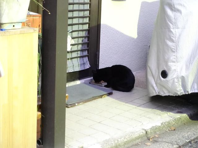 Today's Cat@2019-01-24