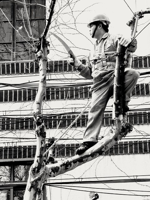 Pruning a tree, #Shanghai