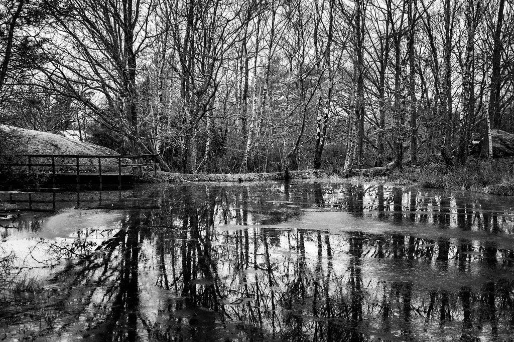 Ice melting on the pond - Black and white