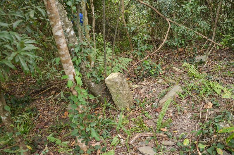 清水冠字補沖(02)的山字森林三角點(Elev. 320 m) 1