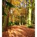 Warley Autumn. 18