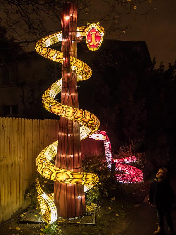 Espèces en voie d'illumination : Le crocodile et le boa 44417405330_5d3a50db48_c