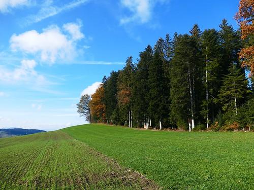 Rotiholz Arni November Herbst 2018
