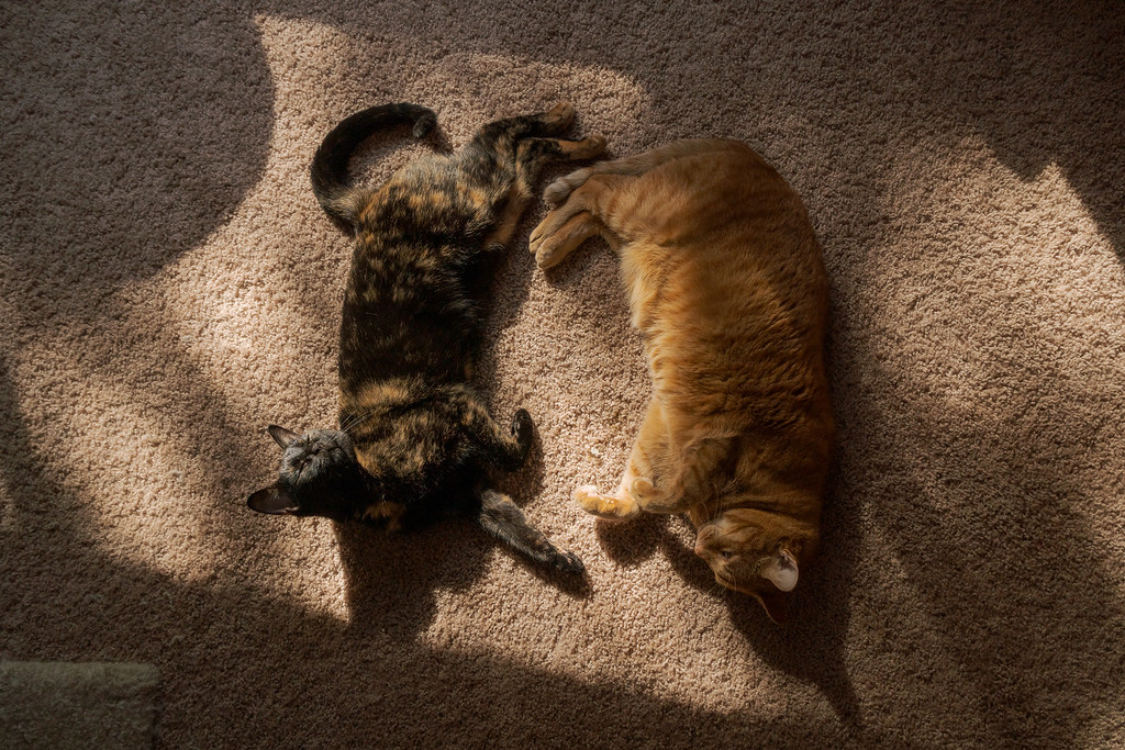 Our cats Trixie and Sam sleep in sunbeams on the carpet of our home in Scottsdale, Arizona