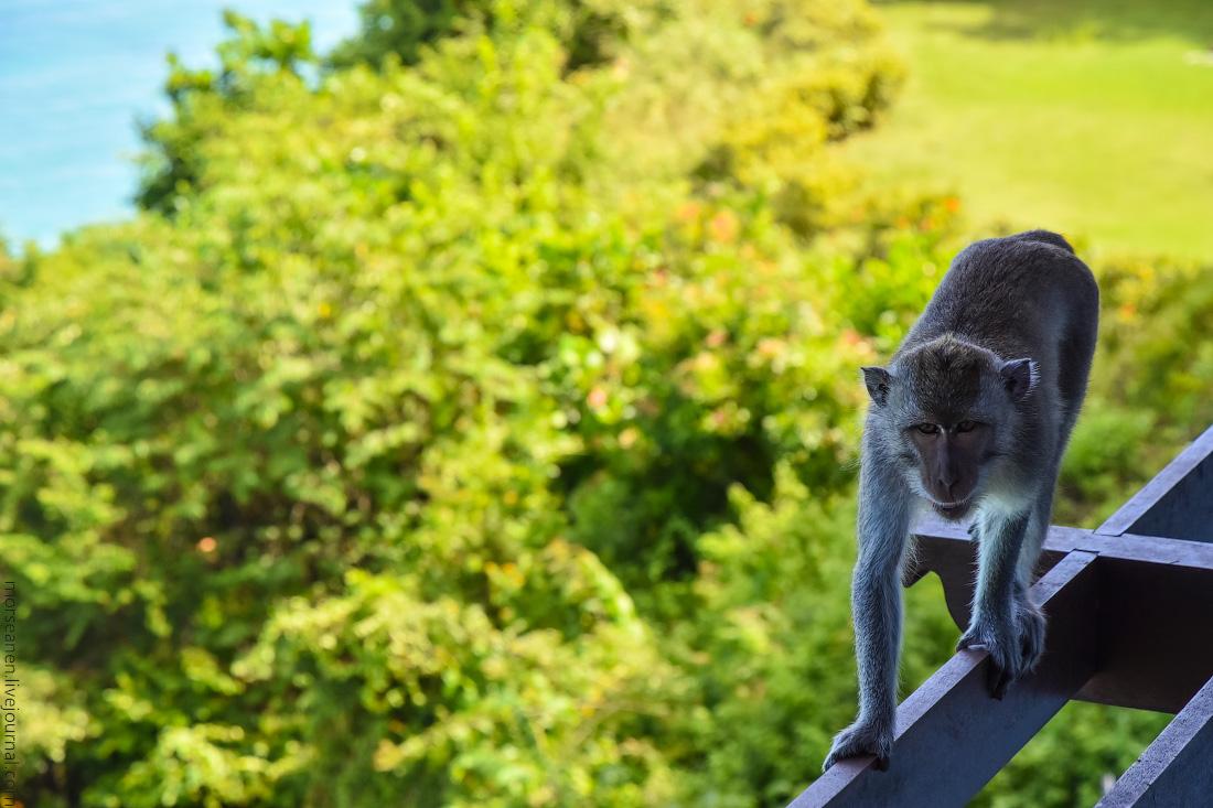 Monkey-Samabe-(4)
